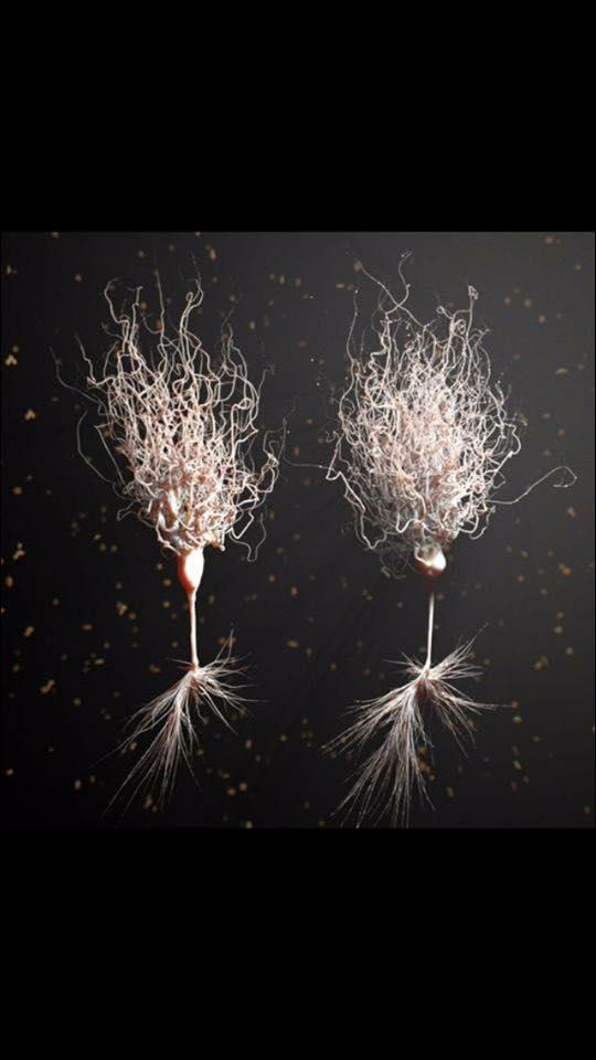 Neuronas en 3D